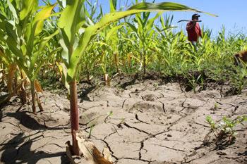 Agricultores de la Región del Maule en problemas por escasez hídrica.