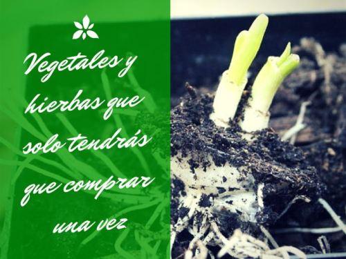 18 vegetales01
