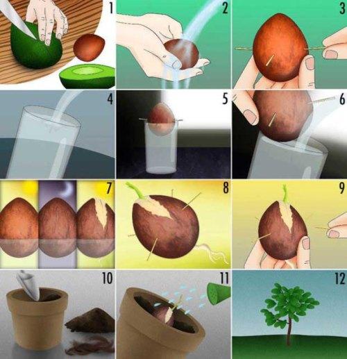 18 vegetales05