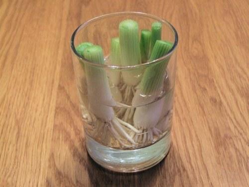 18 vegetales09