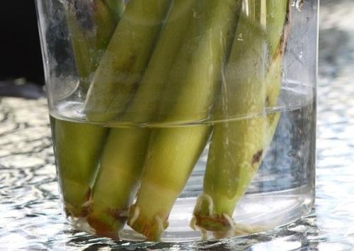 verduras3