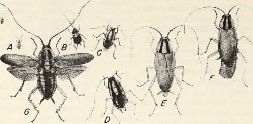 Imagen del libro Cockroaches : how to control them (1980). INTERNET ARCHIVE BOOK IMAGES